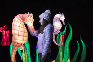 whats on in dublin christmas 2018 - zoo wild lights